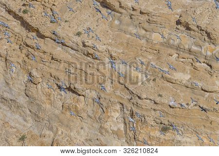 Flock Of Pigeons In The Canyon Ein Avdat In The Negev Desert Of Israel. Traveling In Israel. Landsca