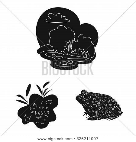 poster of Isolated object of fauna and reptile symbol. Collection of fauna and anuran stock symbol for web.