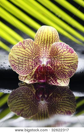 Macro of gorgeous orchid with palm leaf and zen stone