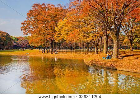 Tokyo, Japan - November 15: Yoyogi Park Beautiful Autumn And Foliage In Tokyo November 15, 2017 In T