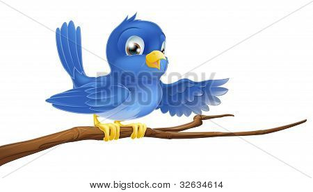 Bluebird Sitting On  Branch Pointing