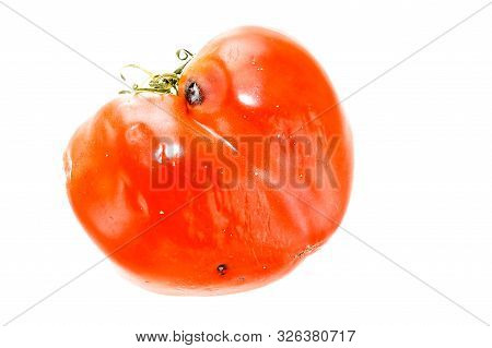 Rotten, Spoiled Tomato with Sepals or Calyx, Uneven Ripening and Mold Spots on Skin Isolated on White Background. poster