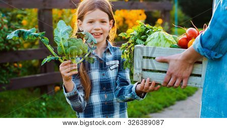 Children Little Girl Holding Mom Broccoli A Basket Of Fresh Organic Vegetables With Home Garden. Hea