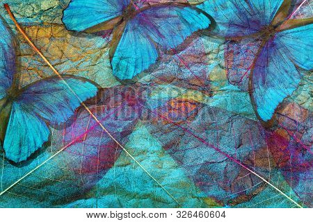 Creative Concept Of Blue Background. Abstract Natural Blue Background. Morpho Blue Butterflies And T