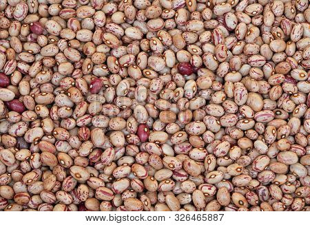 Background Of Thousand Dried Painted Beans In Studio Shot