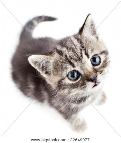 little baby kitten looking upwards top view