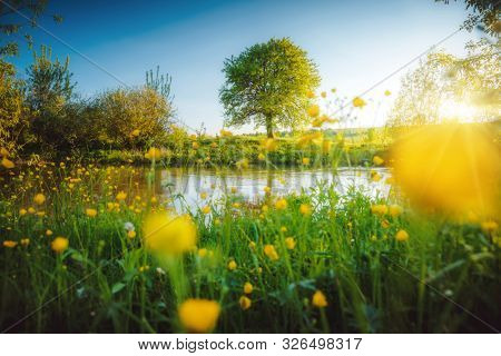 Spectacular meadow with big tree, fresh green leaves. Location place river Seret, Ukraine. Scenic image of the exotic summer view. Wallpaper background. Photo of nature. Discover the beauty of earth.