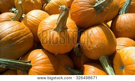 Stack Of Orange Pumpkins Awating The Halloween Holiday