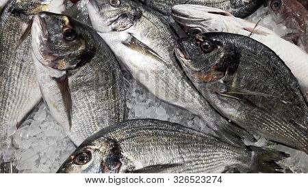 Raw Dorado Fish Restaurant Background. Fresh Organic Sea Bream With Ice. Top View. Gilt-head Over Di