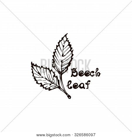 Hand Drawn Beech Leaves With Handwritten Text