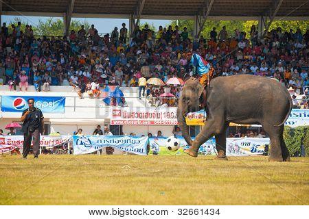 Surin Elephant Kicking Soccer Ball