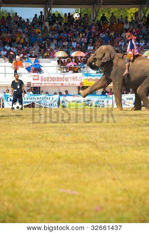Surin Elephant Kicking Soccer Ball High V