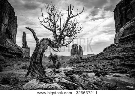 Small lonesome tree in Arches National Park - Utah, United States poster