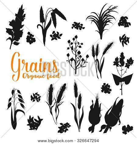 Grains, Monochrome Cereals. Vector Silhouettes Of Rye And Wheat Ears, Oat And Millet, Rice And Barle