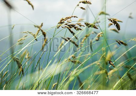 Wind Blowing Through Flower Grass At The Top Of Mountains