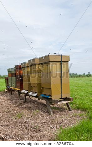 Row Of Wooden Bee Hives In A Field
