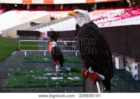 October 6th, 2019, Lisbon, Portugal - Vitoria, An Eagle And The Mascot Of Portuguese Football Club S