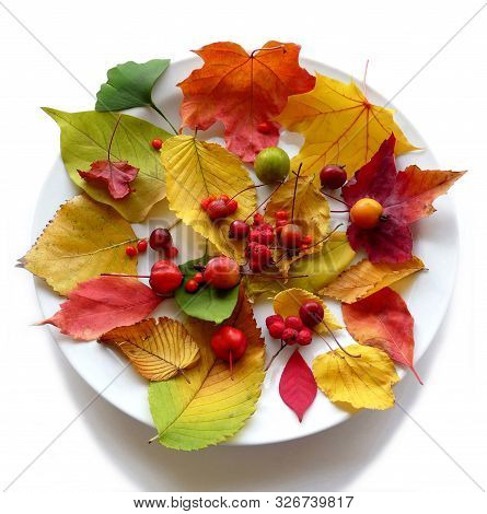 Autumnis So Colorful And Wonderful Attractive Beautiful And Magic Time Celebrate