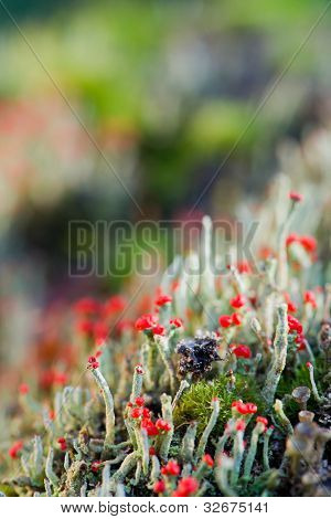 Green with red moss in the autumn forest poster