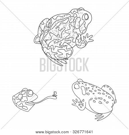Vector Illustration Of Amphibian And Animal Icon. Collection Of Amphibian And Nature Stock Symbol Fo