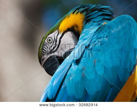 Blue And Yellow Macaw Perched On A Tree