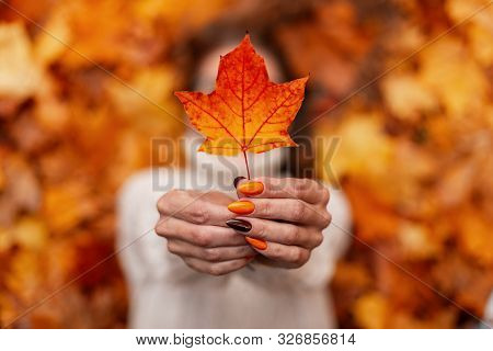 Young Woman In A Knitted White Sweater Holds An Orange-gold Autumn Leaf In Her Hands. Woman With Bea