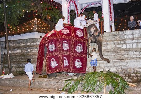 Kandy, Sri Lanka - Aug 11, 2005: People Prepare The Elefant For Participation At The Festival Pera H