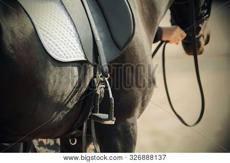 The Black Horse, Which Is Held By The Bridle, Wears A Metal Stirrup, A White Saddlecloth And A Leath