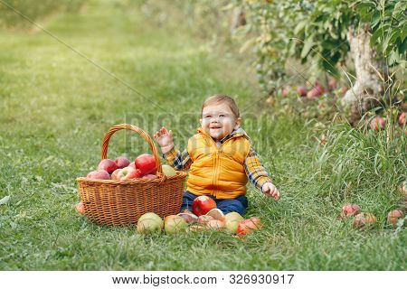 Happy Child On Farm Picking Apples In Orchard. Portrait Of Cute Adorable Funny Little Baby Boy In Ye
