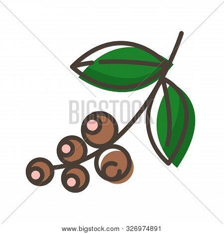 Simple Outline Color Filled Icon - Coffee Beans In Nature, Plant Or Brunch With Beans Or Seeds, Drin