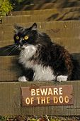 "cat sits over ""beware of the dog"" sign poster"