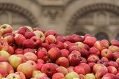 A lot of autumn red beautiful apples. A bountiful harvest. Copyspace poster