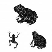 Isolated object of fauna and reptile icon. Set of fauna and anuran vector icon for stock. poster