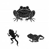 Vector illustration of fauna and reptile icon. Collection of fauna and anuran stock symbol for web. poster