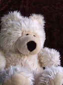 fuzzy teddy bear sitting, dark brown velvet background. poster