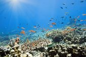 Coral reef underwater with many small fishes poster