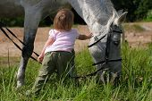 Little girl make an attempt to establish communication with big grey horse. Her height as it's head. At left hand she hold pieces of sugar. poster