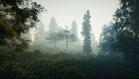 Misty Forest Landscape. Deep Wild Forest In Magic Evening Light With Volumetric Light Rays. 3d Rende