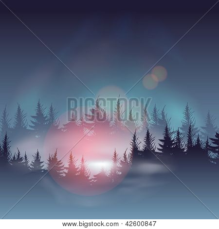 Misty coniferous forests