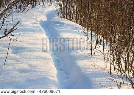 Snow-covered Trail In A Forest Area, Winter