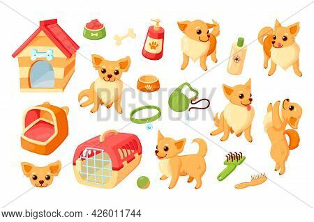 Chihuahua Dog With Kennel, Carrier, Toys And Grooming Stuff. Chihuahua Puppy With Pet Accessories. V