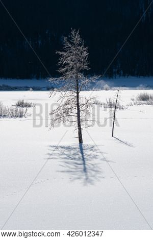 winter shot of backlit frost on a tree growing in the lamar valley of yellowstone national park