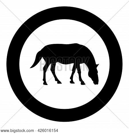 Steed Horse Equestrian Equine Stallion Thoroughbred Mustang Silhouette In Circle Round Black Color V