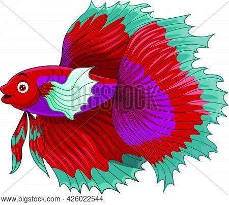 Vector Illustration Of Cartoon Red Siamese Fighting Fish