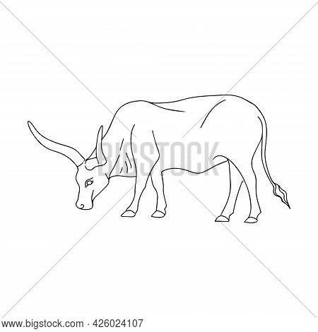 Vector Illustration Of A Bull. Grazing Cattle. Bull Logo. Simple Linear Illustration Of A Buffalo. L