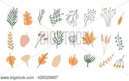Set Of Autumn Herbarium. Different Branches And Twigs With Berries And Leaves. Wild Forest Plants. V