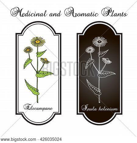 Elecampane Inula Helenium , Or Horse-heal, Or Elfdock, Medicinal Plant. Hand Drawn Botanical Vector