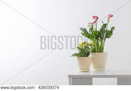 Pink Calla Lily And Yellow Kalanchoe   In Flower Pot On White Background
