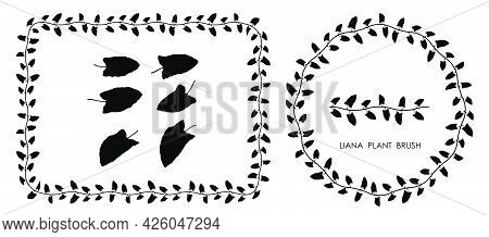 Black Thin  Liana Grass Leaves Silhouettes Isolated On White. Climbing Thin Plant Brush. Decorative