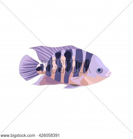 Cartoon Illustrations Of Cichlid Fish Isolated On White Background.